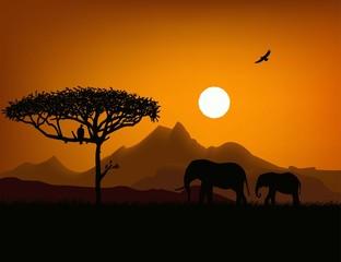 Sunset savanna