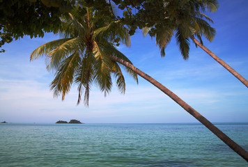 Two palm-trees against tropical islands in the ocean