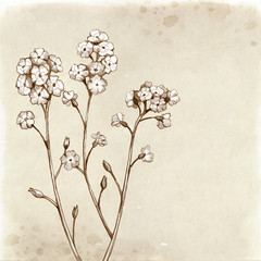 Forget me not flowers drawing. Vintage background