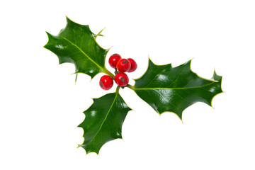Sprig of holly isolated on white
