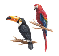 Toucan and parrot drawings