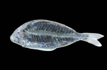 fish x ray