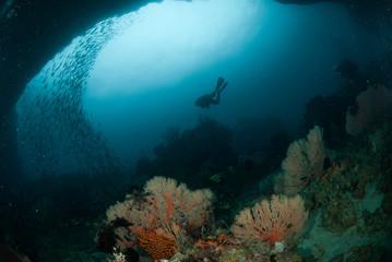 Diver, sea fan in Ambon, Maluku, Indonesia underwater