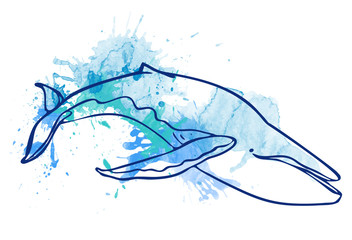 watercolor illustration. blot watercolor. whale