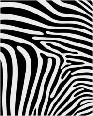 Black and white pattern skin of zebra 2 ,vector