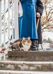 Cat on a walk on a winter day