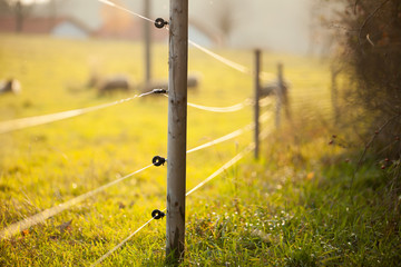 Electric fencing around a pasture with farm animals Wall mural
