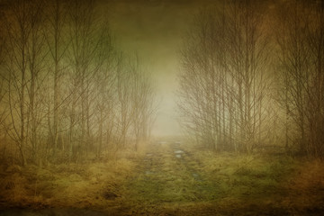 road in the fog Wall mural