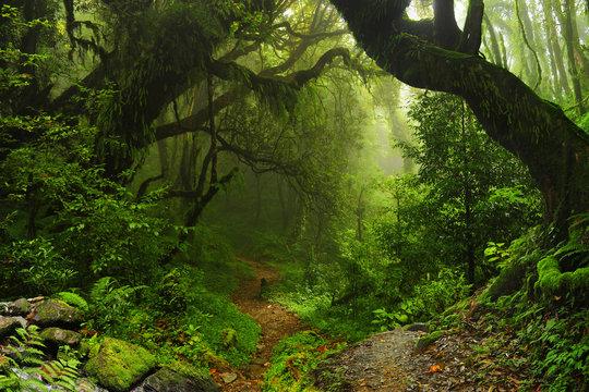Selva Nepal