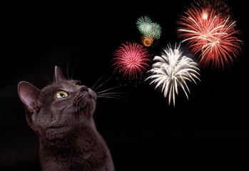 Katze mit Feuerwerk