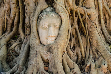 Head of Buddha in the tree root in Wat Mahathat, Ayutthaya