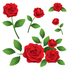Red Roses Illustrate