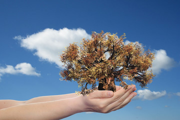 Conceptual human hand and tree
