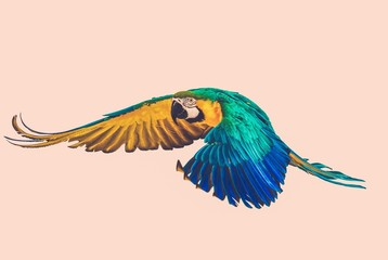 Wall Mural - Colourful flying parrot toned