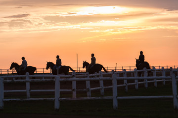 Race Horses Training Track Riders Silhouetted 0Sunrise