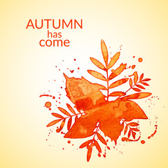 Autumn watercolor rowan leaves and spray, vector illustration