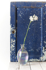 tuberose flower on glass vase with vintage cracked blue backdrop