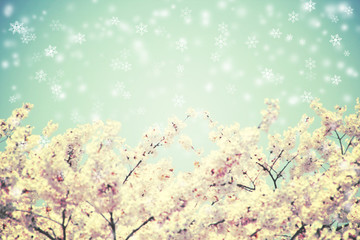 Cherry blossoms and blue sky with snow falling. Vintage flower b
