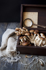 fresh mushrooms on vintage wooden box with magnifying glass