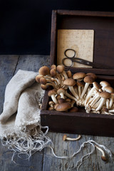 fresh mushrooms on old wooden box with scissor