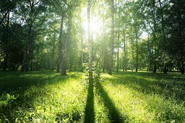 sun light in summer park