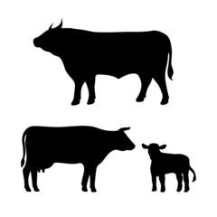 cow, bull, calf