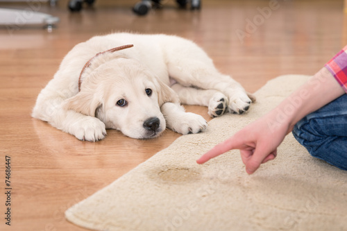 best way to get dog smell out of carpets