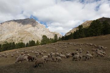 Saison Berger, Alpes de hautes Provence