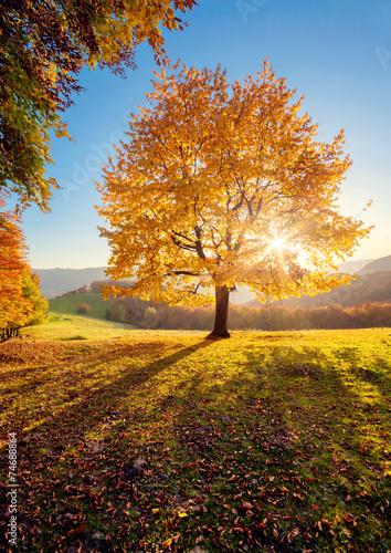 Wall mural beautiful autumn trees
