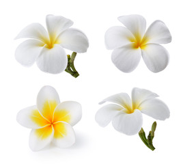 Zelfklevend Fotobehang Frangipani Tropical flowers frangipani (plumeria) isolated on white backgro