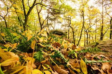 Wald: Genuss für die Sinne :)