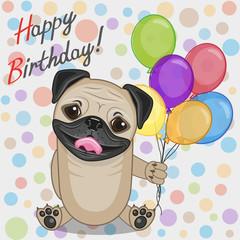 Pug Dog with balloons