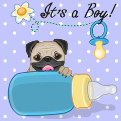 Pug Dog boy
