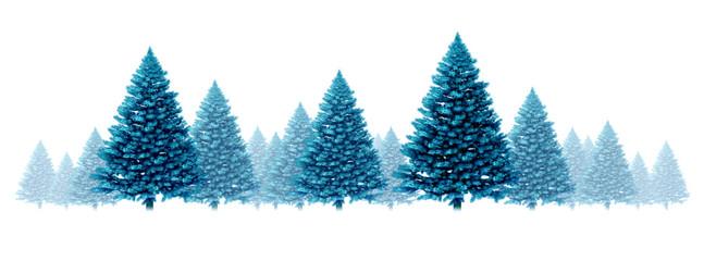 Winter Blue Pine Background