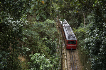 Red Brazilian Train Green Jungle Tijuca Rio Brazil