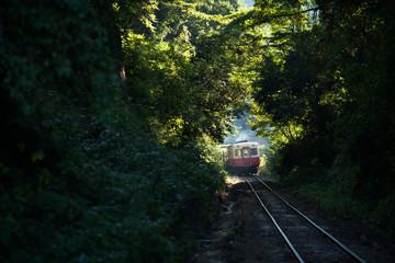 緑のトンネルをぬける汽車