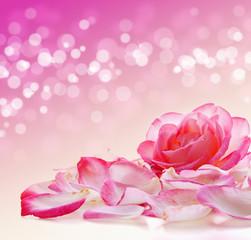 Pink Rose and petals.