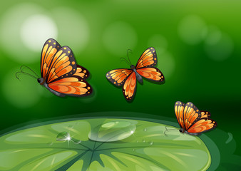 Butterflies and water lily