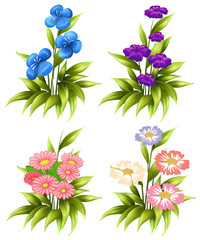 Four sets of blooming flowers