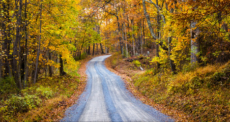 Autumn color along a dirt road in Frederick County, Maryland.