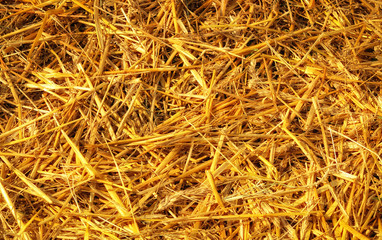 Texture hay closeup in color