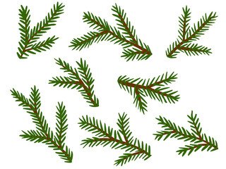 Vektor-Set: Grüne Tannenzweige, Vektor / freigestellt