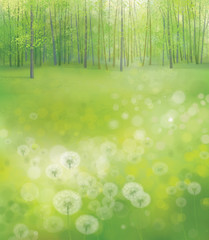 Vector white  dandelions on forest background.
