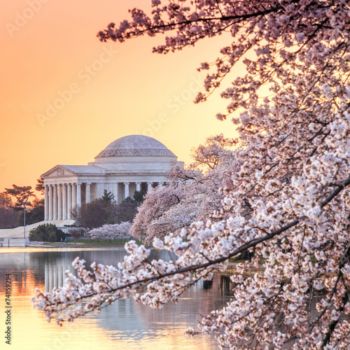 Wall mural the Jefferson Memorial during the Cherry Blossom Festival