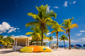 Palm trees on the beach in Key West, Florida.