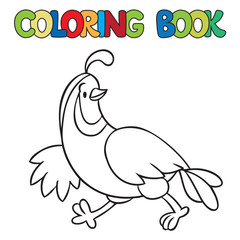 Coloring book of little quail