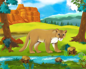 Cartoon scene - wild america animals - cougar - illustration for the children