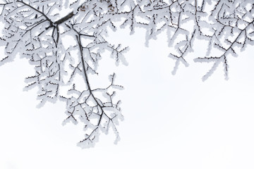 snow-covered branches pattern on a white background