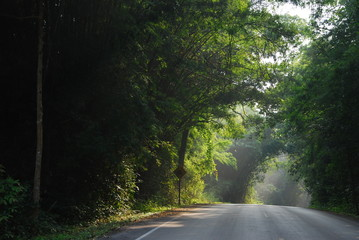 silent road in forest