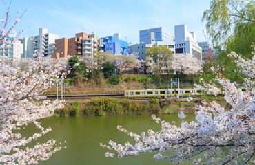 Foto auf AluDibond Tokio Cherry blossoms at the Sotobori Park in Tokyo